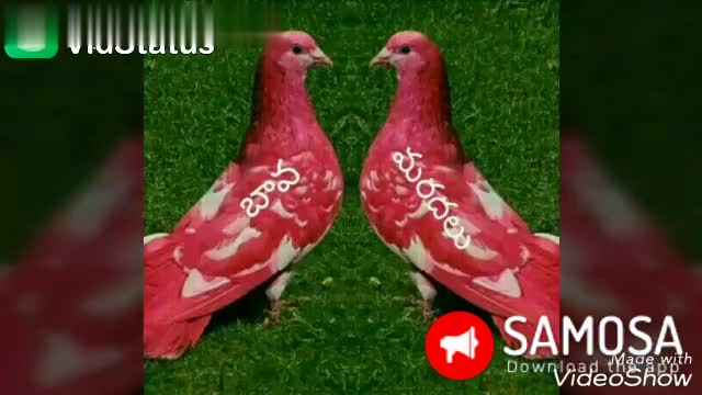 లవ్ Whatsapp స్టేటస్💓 - Dowvelgas from LON Mardal ' s Bava SAMOSA Download trade with VideoShow Dowelgag from Mer King 2J . . 300 ev . . . SAMOSA Download the wpth Video Show - ShareChat