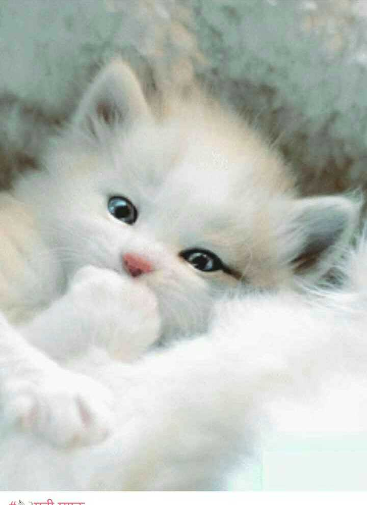 Cat Wallpaper - ETT  - ShareChat