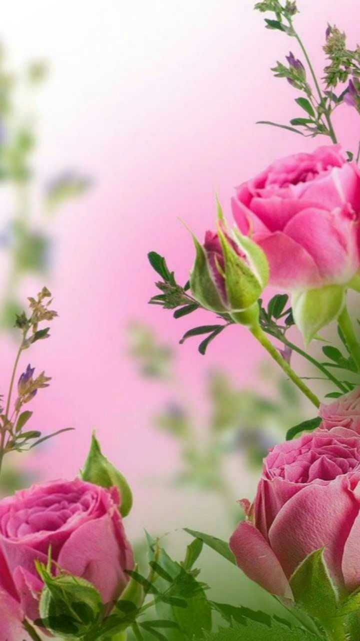 💐Flower photography - ShareChat