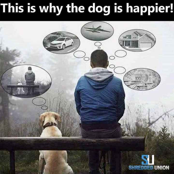 💪GYM/योगा - This is why the dog is happier ! SU SHREDDED UNION - ShareChat