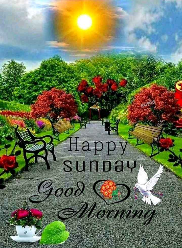 🌞Good Morning🌞 - Happy ' Sunday Good C Morning - ShareChat
