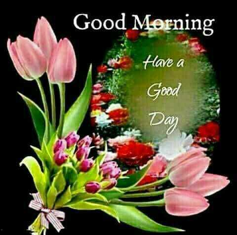 🌞Good Morning🌞 - Good Morning Have a Good Day - ShareChat