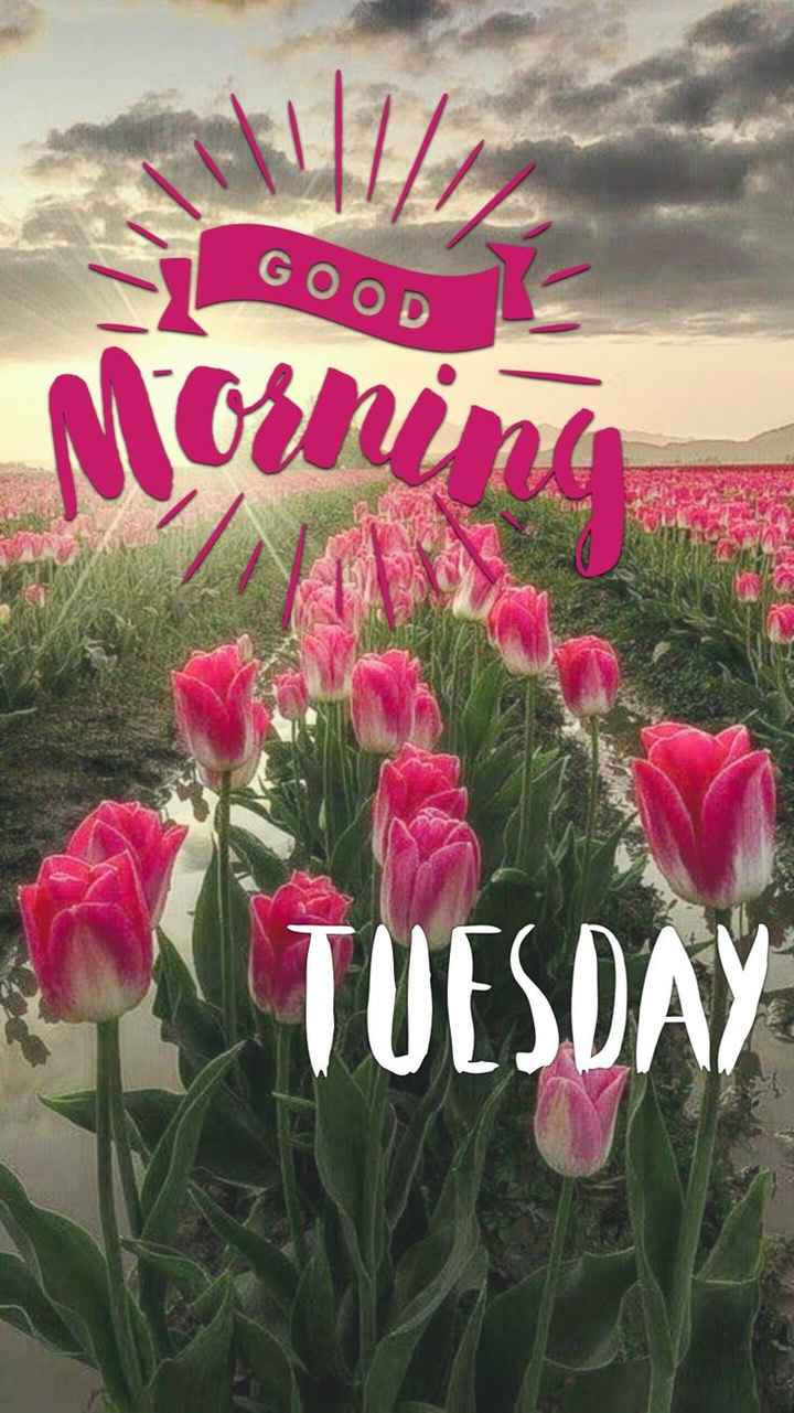 🌞Good Morning🌞 - GOOD Morning TUESD  - ShareChat