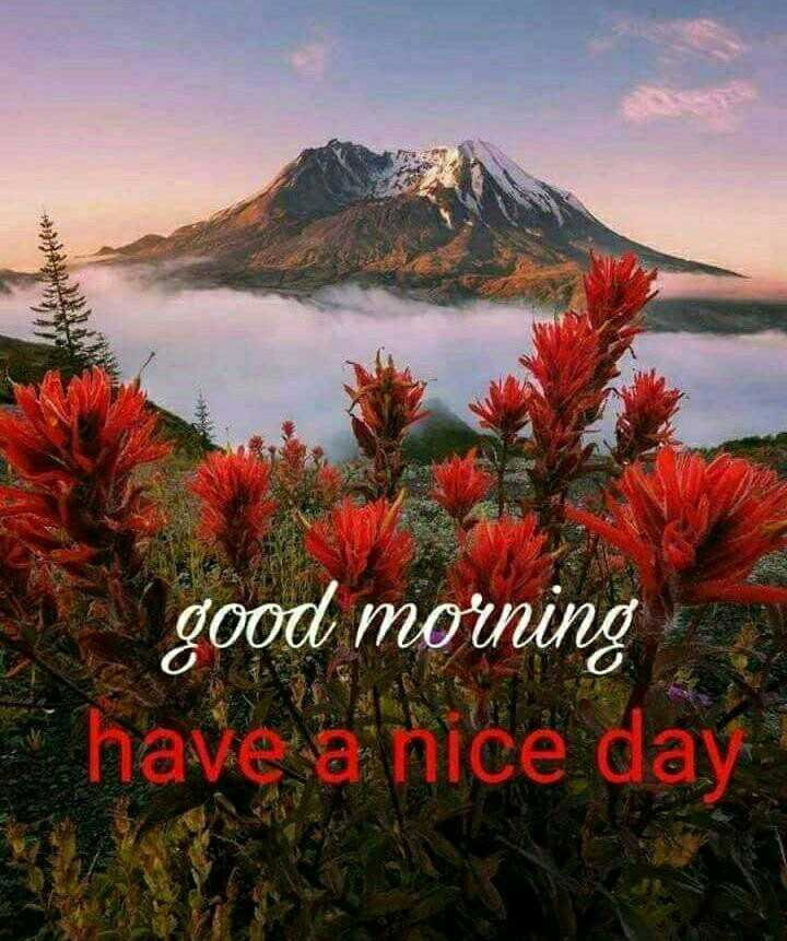 🌞Good Morning🌞 - a good morning have a nice day - ShareChat