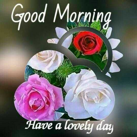 🌞Good Morning🌞 - Good Morning Have a lovely day - ShareChat