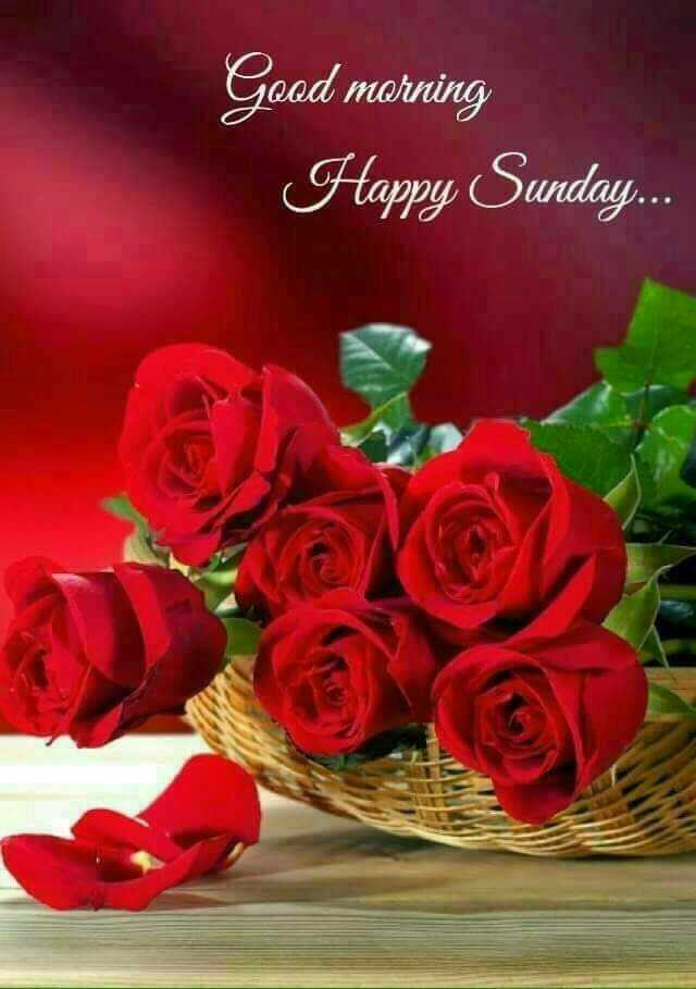 Good Morning - Good morning Happy Sunday . . . - ShareChat