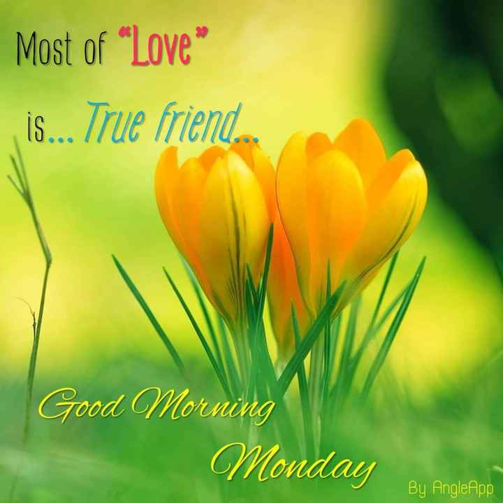 Good Morning - Most of Love , Is . . . True friend Good Morning Monday By Angle App - ShareChat