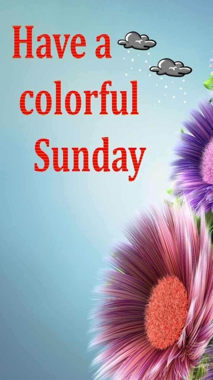 Happy Sunday - Have a colorful Sunday - ShareChat