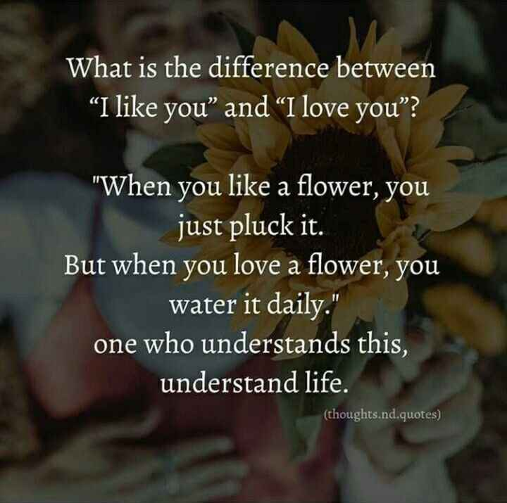 "🧐VIRAL STARS INFO - What is the difference between I like you "" and "" I love you "" ? When you like a flower , you just pluck it . But when you love a flower , you water it daily . one who understands this , understand life . ( thoughts . nd . quotes ) - ShareChat"