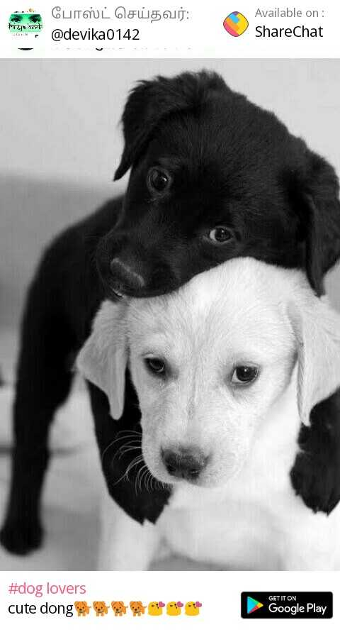 🤝 friendship day - Available on ShareChat hinin- .. @ devika0142 #dog lovers cute dong 腎 帋 traer GET IT ON Google Play - ShareChat
