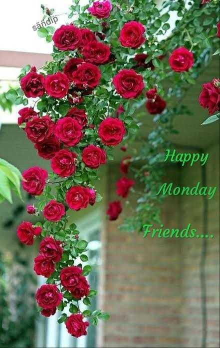 Good morning - sandip Happy Monday Friends . . . . - ShareChat