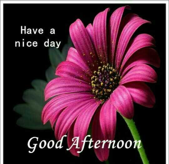 good afternoon - Have a nice day Good Afternoo - ShareChat