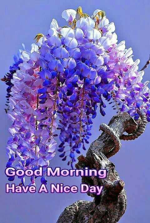 आखिरी रोज़े - Good Morning Have A Nice Day - ShareChat