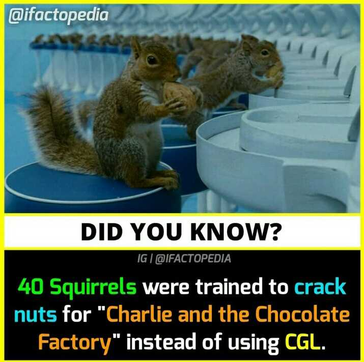 😏 रोचक तथ्य - @ ifactopedia DID YOU KNOW ? IG @ IFACTOPEDIA 40 Squirrels were trained to crack nuts for Charlie and the Chocolate Factory instead of using CGL . - ShareChat
