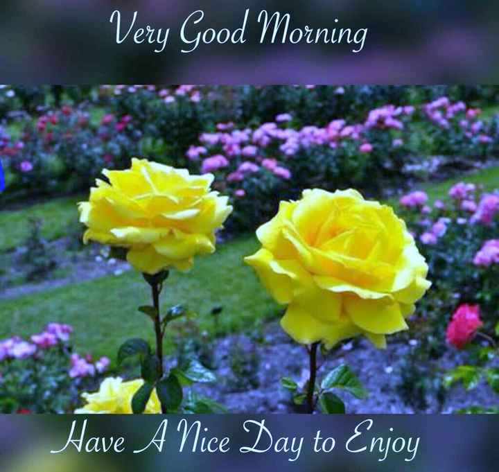 खामोशियॉ जिन्दगी की - Very Good Morning Have A Nice Day to Enjoy - ShareChat