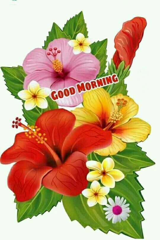 🌷S.RJS🌺 - GOOD MORNING - ShareChat