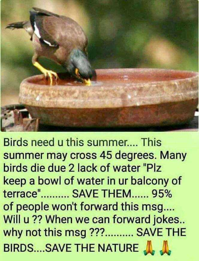 beautyful nature - Birds need u this summer . . . . This summer may cross 45 degrees . Many birds die due 2 lack of water Plz keep a bowl of water in ur balcony of terrace . . . . . . . . . SAVE THEM . . . . . 95 % of people won ' t forward this msg . . . . Will u ? ? When we can forward jokes . . why not this msg ? ? ? . . . . . . . . . SAVE THE BIRDS . . . . SAVE THE NATURE IN - ShareChat