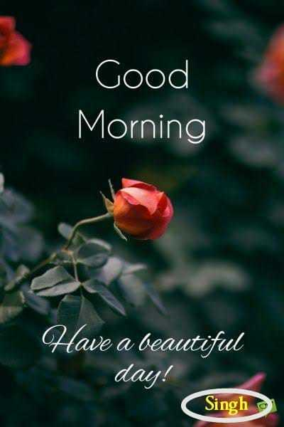GOOD☕☕☕MORNING - Good Morning Have a beautiful day ! Singh - ShareChat