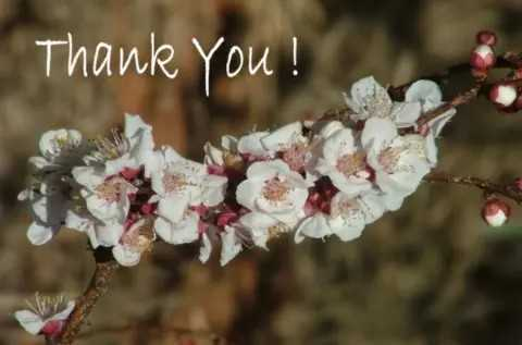 thank you  so much... - ! Thank you ! - ShareChat