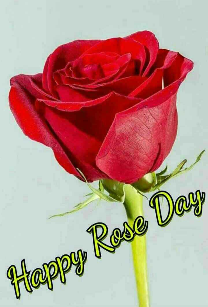 dr.msg lovers - Happy Rose Day - ShareChat