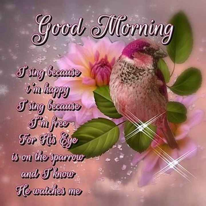 good morning frnds - Good Morning Tsing because i ' m happy Faung because I ' m free For His Eye is on the sparrow and I know He watches me - ShareChat