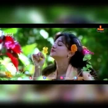പ്രണയഗാനങ്ങൾ - SRINA ROSE SAINA MUSIC SAIN MUSIC ROSE SIC JOHNS f airedovito TO MEG video - ShareChat
