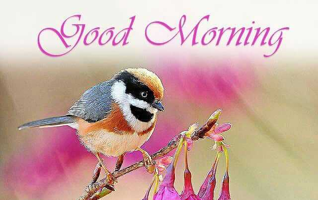 GOOD🍡🍡🍡MORNINIG - Good Morning - ShareChat