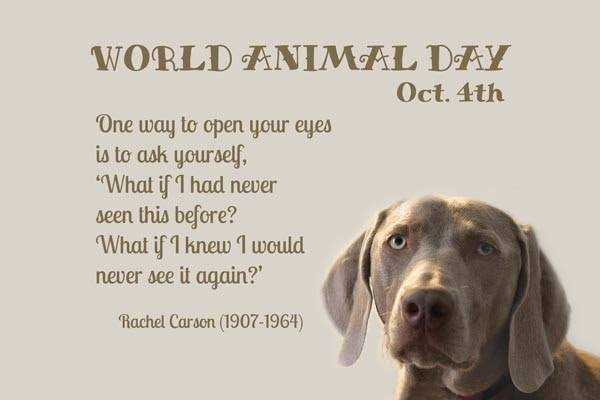 World Animal Day - WORLD ANIMAL DAY Oct . 4th One way to open your eyes is to ask yourself , What if I had never seen this before ? What if I knew I would never see it again ? ' Rachel Carson ( 1907 - 1964 ) - ShareChat