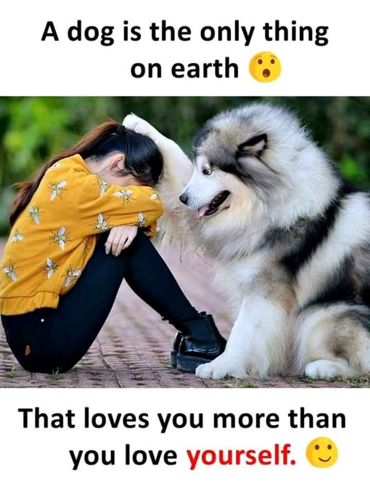 superb - A dog is the only thing on earth That loves you more than you love yourself . ☺ - ShareChat