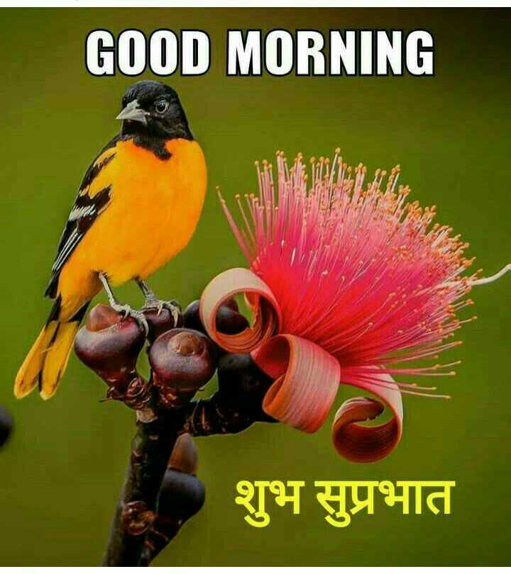 🌞Good Morning🌞 - GOOD MORNING शुभ सुप्रभात - ShareChat