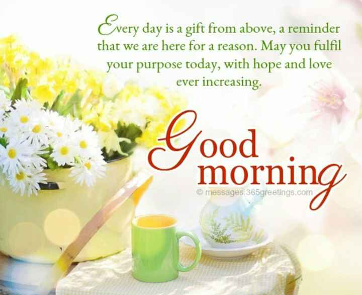 morning..! - Cvery day is a gift from above , a reminder that we are here for a reason . May you fulfil your purpose today , with hope and love ever increasing Good mornina © messages . 365greetings . com - ShareChat