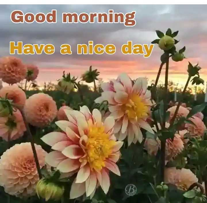 shubkamnaye - Good morning Have a nice day - ShareChat