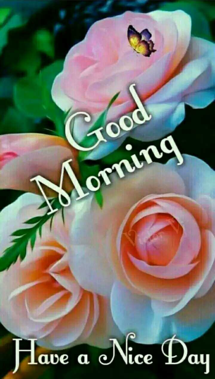 🌞Good Morning🌞 - Good Tood Morning Have a Nice Day - ShareChat