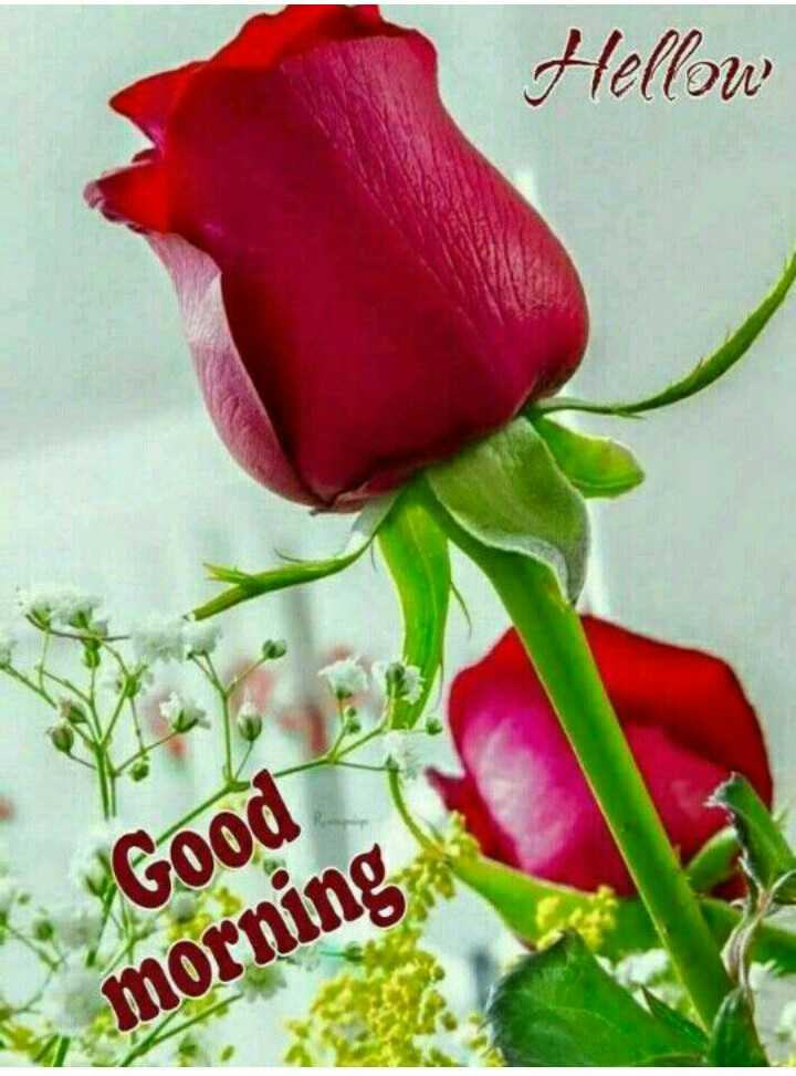 🌹good morning 🌹 - Hellow Good morning - ShareChat