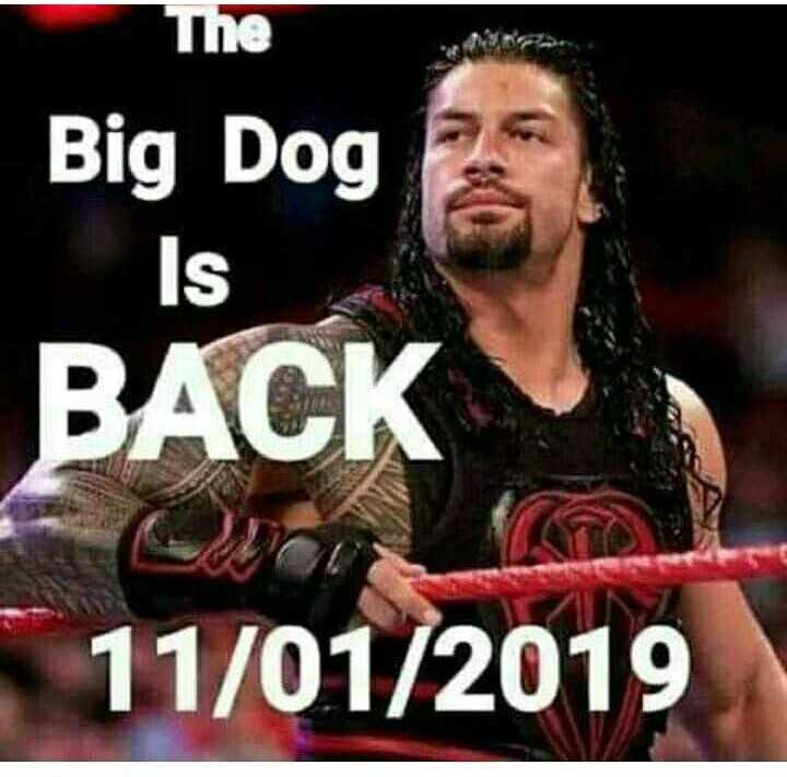 wwe - The Big Dog IS BACK 11 / 01 / 2019 - ShareChat