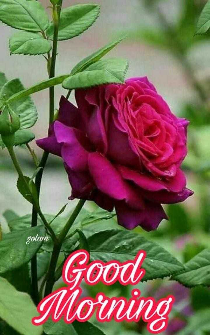 good  morning - golam Good Morning - ShareChat
