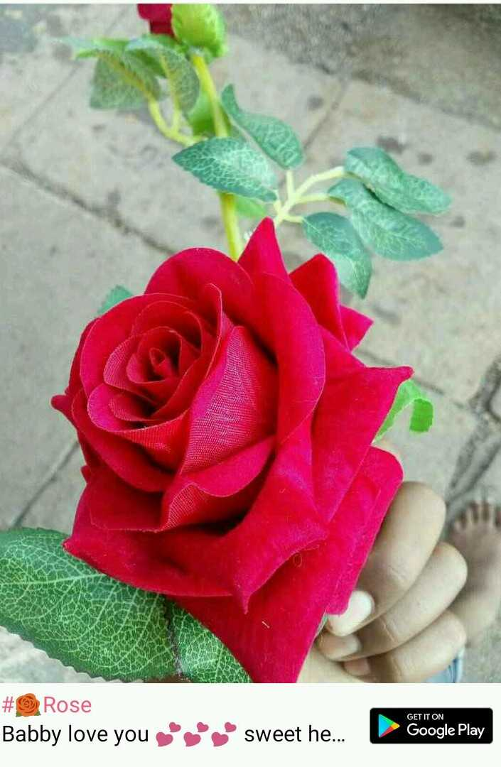 red rose - # Rose Babby love you sweet he . . . GET IT ON Google Play - ShareChat