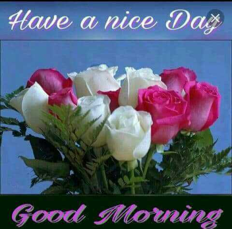 good morning - Have a nice Day Good Morning - ShareChat