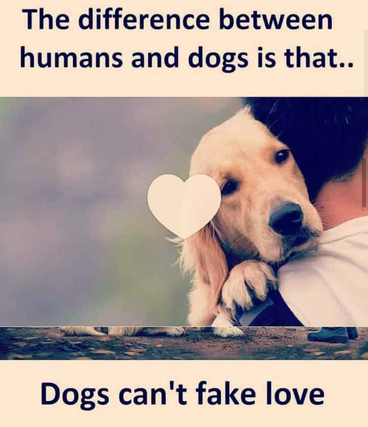 feelings - The difference between humans and dogs is that . . Dogs can ' t fake love - ShareChat