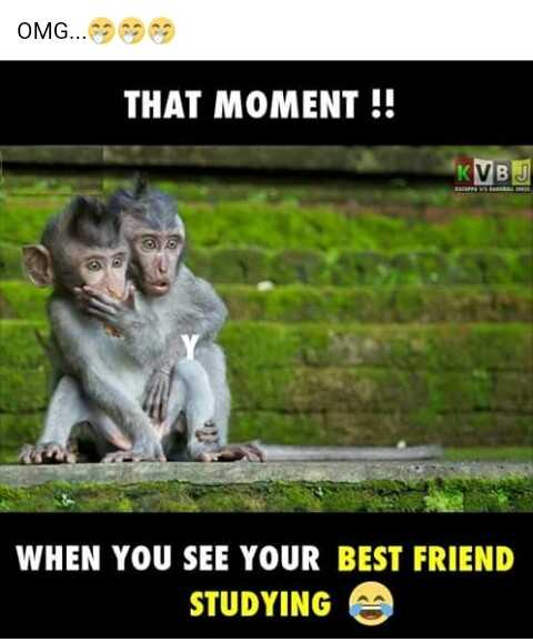 funny images - OMG . . . THAT MOMENT ! ! ! KVBJ WHEN YOU SEE YOUR BEST FRIEND STUDYING - ShareChat
