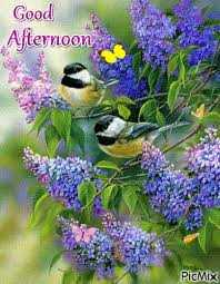 good afternoon Friends - Good Afternoon PicMix - ShareChat
