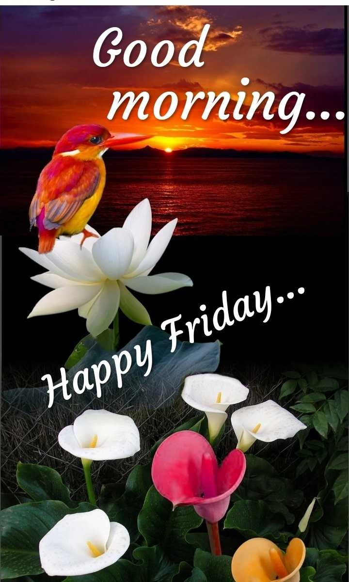 Happy Friday Image Anand Sharechat Funny Romantic