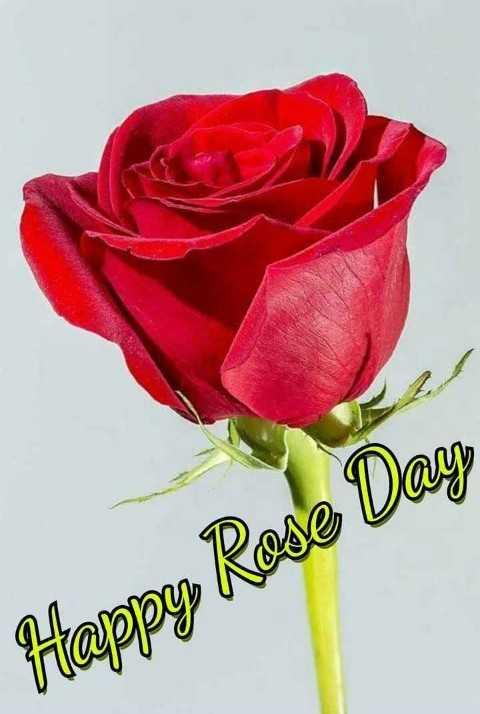 happy rose day - Happy Rose Day - ShareChat