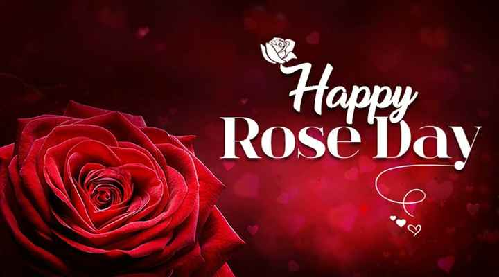 🌹happy 🌹rose 🌹day - Happy Rose Day - ShareChat
