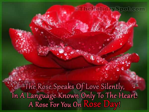 happy rose day🌹 - ©The HolidaySpot . com The Rose Speaks Of Love Silently , In A Language Known Only To The Heart . A Rose For You On Rose Day ! - ShareChat