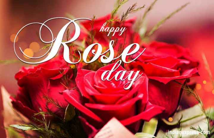 happy rose day - happy Rose AAY indianexpress - ShareChat