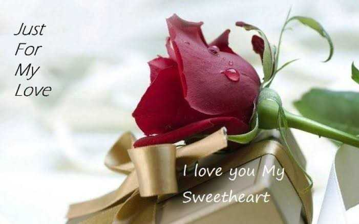 🌷 happy rose day - Just For My Love I love you My Sweetheart - ShareChat