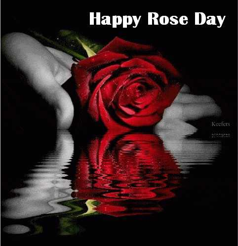 happy rose day - Happy Rose Day Keeters - ShareChat