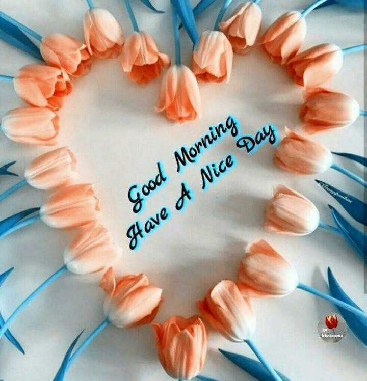 happy winter - Good Morning Have A Nice Day blossom - ShareChat