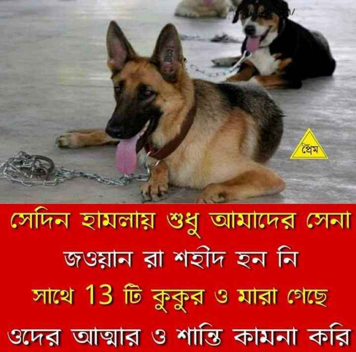 i love dogs - ShareChat